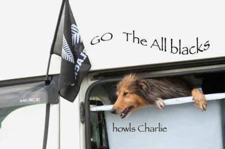 Charlie backing black